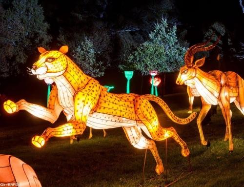 Mencari Tempat Jaul Lampion Dengan Harga Lampion Karakter Kartun